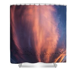 Heading For Cover Shower Curtain
