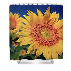 Shower Curtain featuring the photograph Heading For Gold by Chris Berry