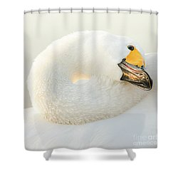 Shower Curtain featuring the photograph Healing by Tatsuya Atarashi
