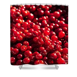 Healthy Pile Of Lingonberries Shower Curtain
