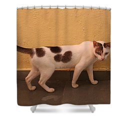 Heart Cat At Rosie's In Ganeshpuri Shower Curtain by Jennifer Mazzucco