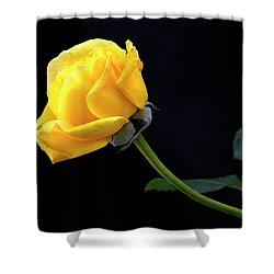 Heart Felt Shower Curtain by James Steele