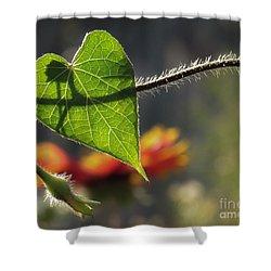 Heart Leaf 1 Shower Curtain