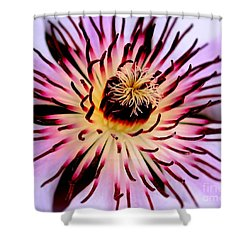 Heart Of A Clematis Shower Curtain by Baggieoldboy