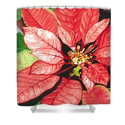 Poinsettia, Star Of Bethlehem No. 2 Shower Curtain