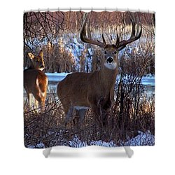 Heartbeat Of The Wild Shower Curtain by Bill Stephens