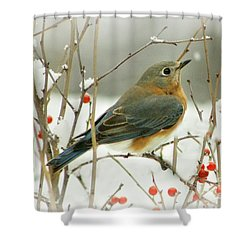 Hearts Desire Shower Curtain by Barbara S Nickerson