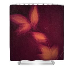 Heated Shower Curtain