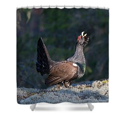Heather Cock In The Morning Sun Shower Curtain by Torbjorn Swenelius
