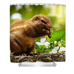 Shower Curtain featuring the photograph Heathy Breakfast by Christine Sponchia