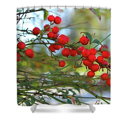 Heavenly Bamboo Shower Curtain