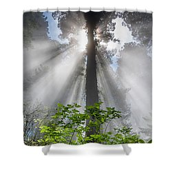 Heaven's Light Shower Curtain