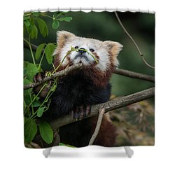 Heavenwards Shower Curtain