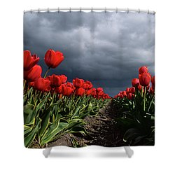 Heavy Clouds Over Red Tulips Shower Curtain by Mihaela Pater