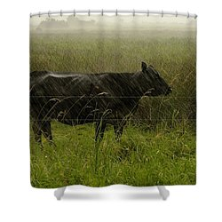 Heifer In The Rain Shower Curtain