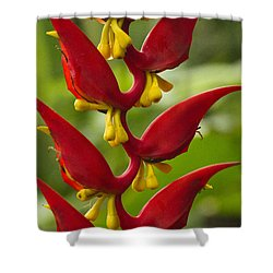 Heliconia Dielsiana Shower Curtain by Heiko Koehrer-Wagner