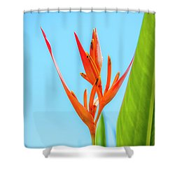 Heliconia Flower Shower Curtain