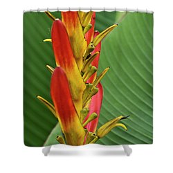 Heliconia Shower Curtain by Heiko Koehrer-Wagner