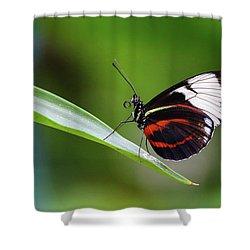 Heliconius Shower Curtain