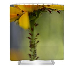 Heliopsis Infested Shower Curtain