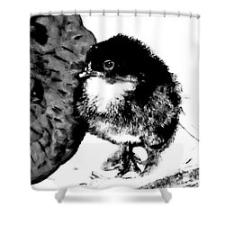 Hello Baby Chick Shower Curtain