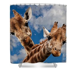 Shower Curtain featuring the photograph Hello by Christine Sponchia