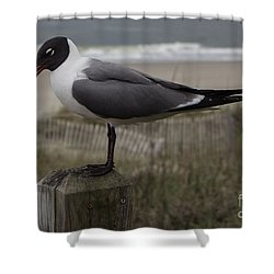 Hello Friend Shower Curtain by Roberta Byram