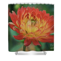 Hello Gorgeous Shower Curtain by Patricia Strand