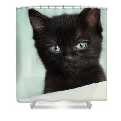 Shower Curtain featuring the photograph Hello Kitty by Amy Tyler