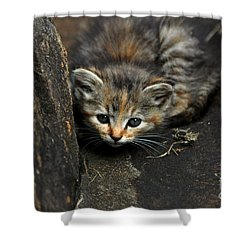 Hello Little Kitty Shower Curtain by Eric Liller