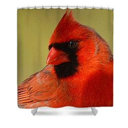 Hello Red Shower Curtain