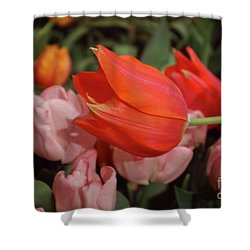 Hello Shower Curtain by Sandy Moulder