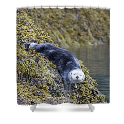 Hello Sea Otter Shower Curtain