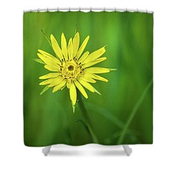 Shower Curtain featuring the photograph Hello Wild Yellow by Bill Pevlor