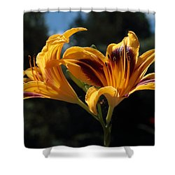 Hemerocallis Shower Curtain