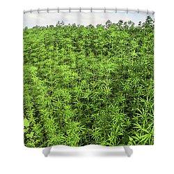 Hemp Plantation Shower Curtain