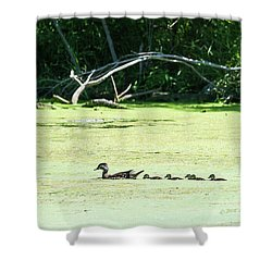 Hen And Baby Wood Ducks Shower Curtain by Edward Peterson