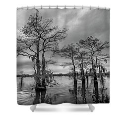 Henderson Swamp Wetplate Shower Curtain by Andy Crawford
