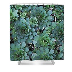 Hens And Chicks - Digital Art  Shower Curtain