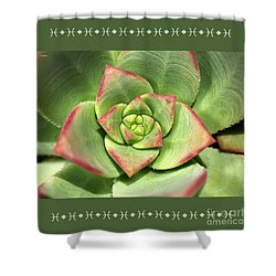 Hens And Chicks Succulent And Design Shower Curtain by Joy Watson