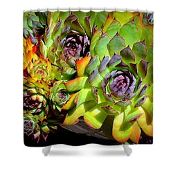 Hens 'n Chicks Shower Curtain