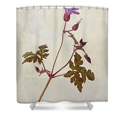 Herb Robert - Wild Geranium  #flower Shower Curtain