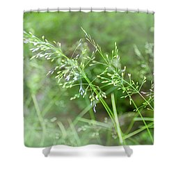 Herbs Close Up Shower Curtain