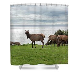 Herd Of Elk At Ecola State Park Shower Curtain