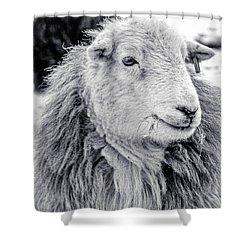 Herdwick Sheep Shower Curtain by Keith Elliott