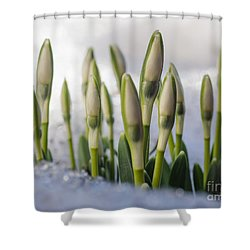 Here Comes The Spring Shower Curtain