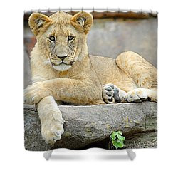 Here Kitty Kitty Shower Curtain by Dyle   Warren