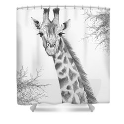 Shower Curtain featuring the drawing Here's Looking At You by Phyllis Howard