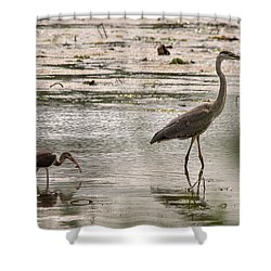 Heron And Ibis Shower Curtain