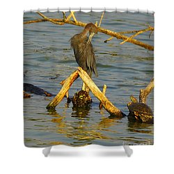 Heron And Turtle Shower Curtain by Robert Frederick